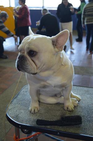 Дерматит у собак  симптомы лечение препараты причины